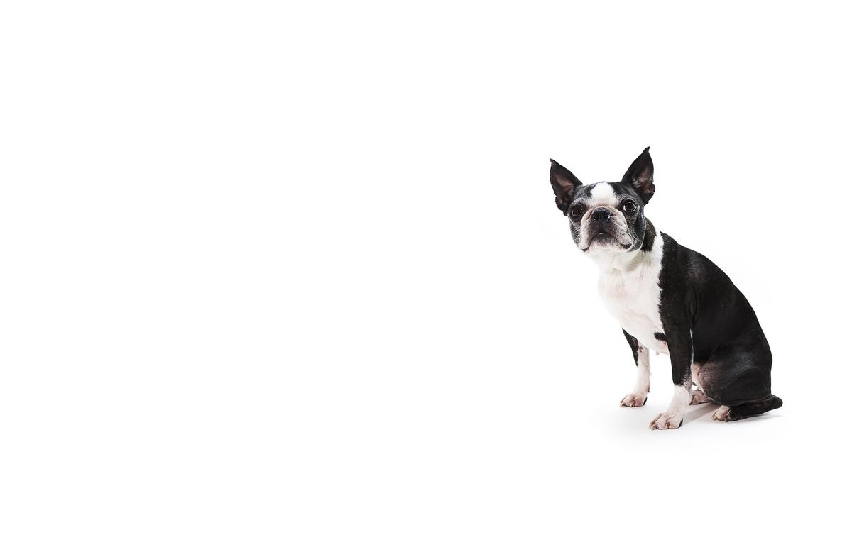 Dog Blck White